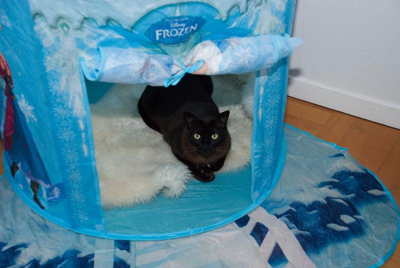 kat i frost telt